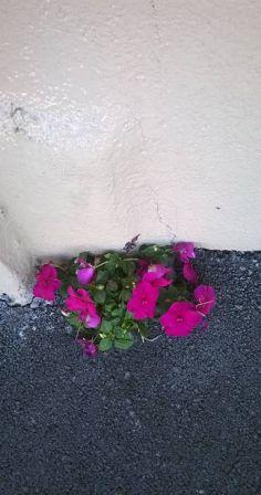 Flowers growing out of a concrete wall